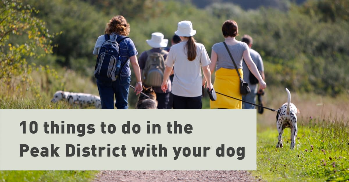 Dog friendly days out in the Peak District