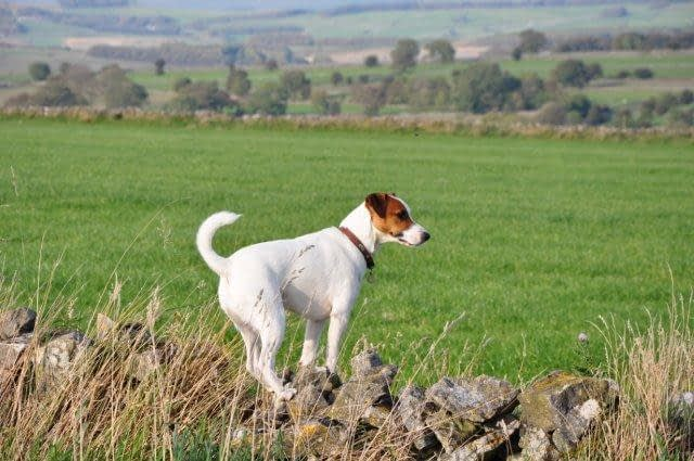 Dog Friendly Cottages in the Peak District